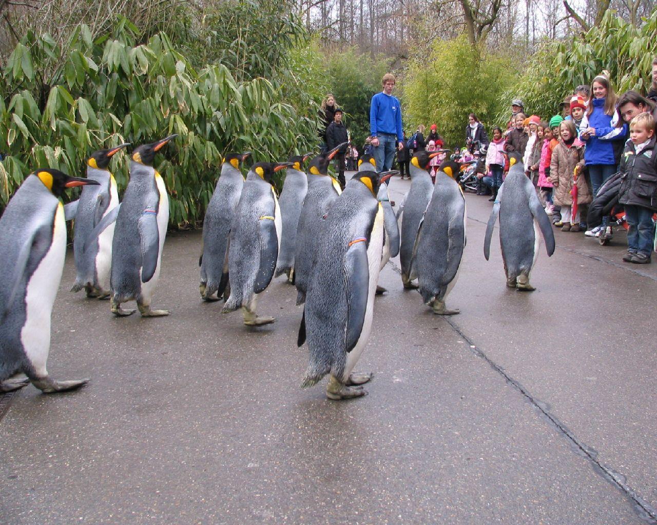 Garden Photos From The Zurich Zoo Zoological Garden Switzerland