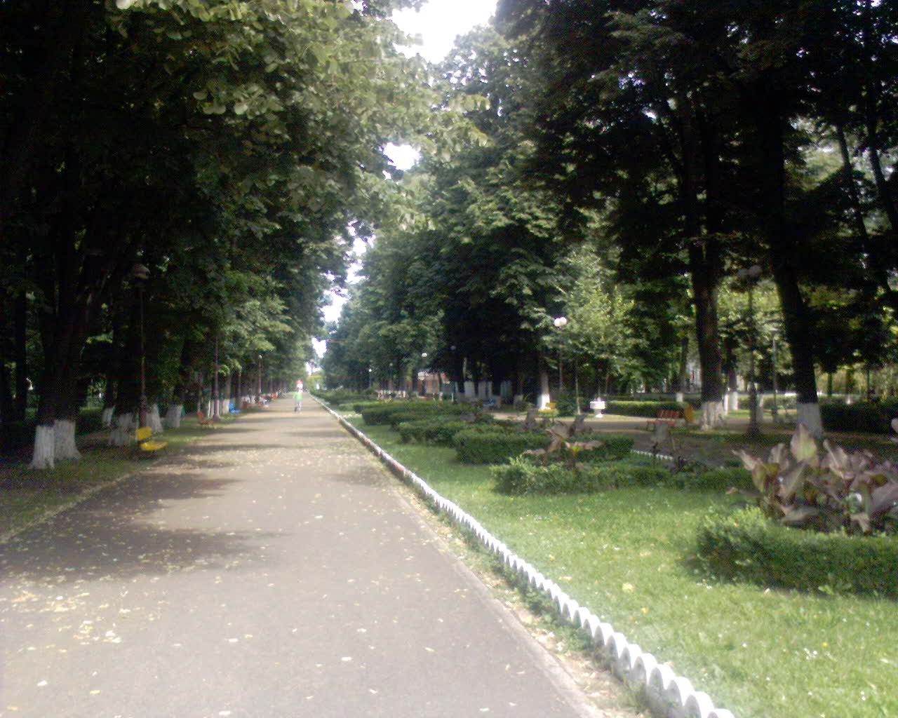 Poze şi imagini din oraşul Bacău